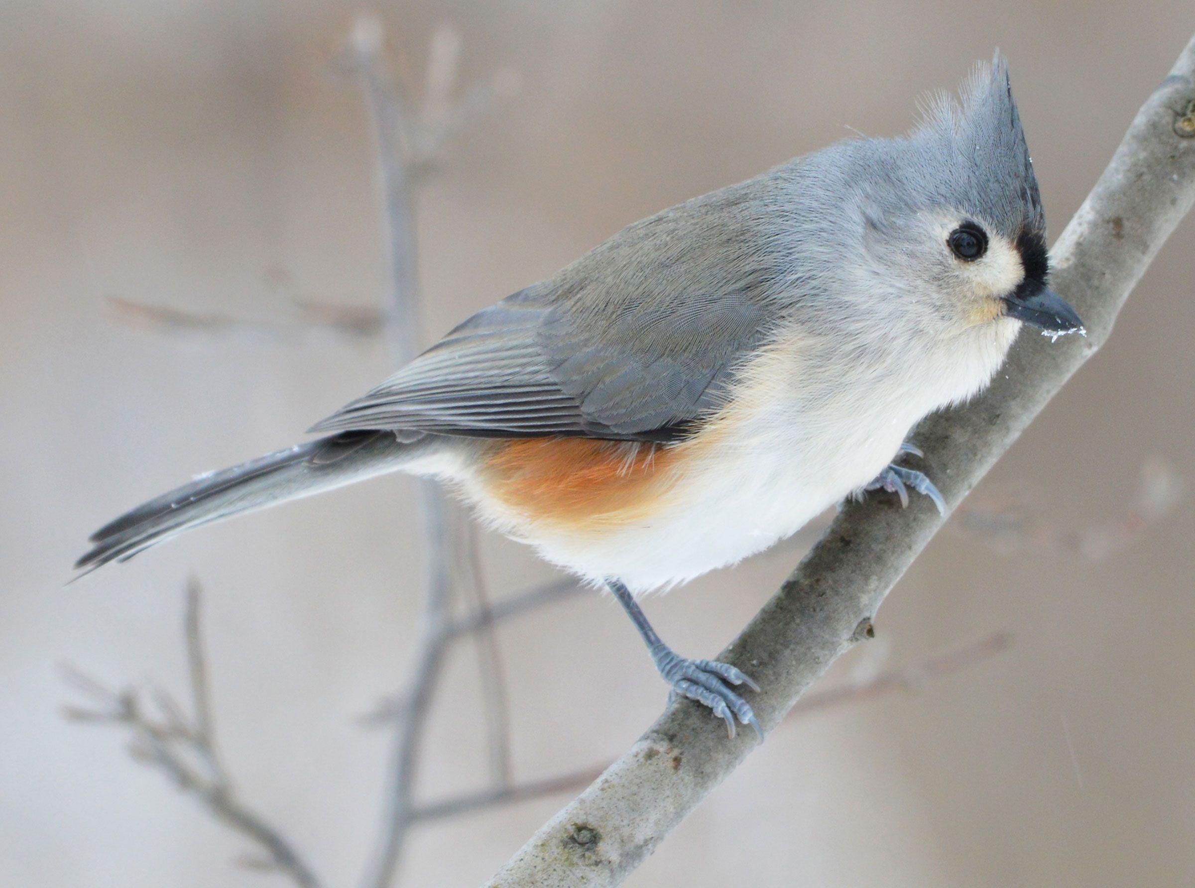 Get to Know These 15 Common Birds | Common birds, Birds ...