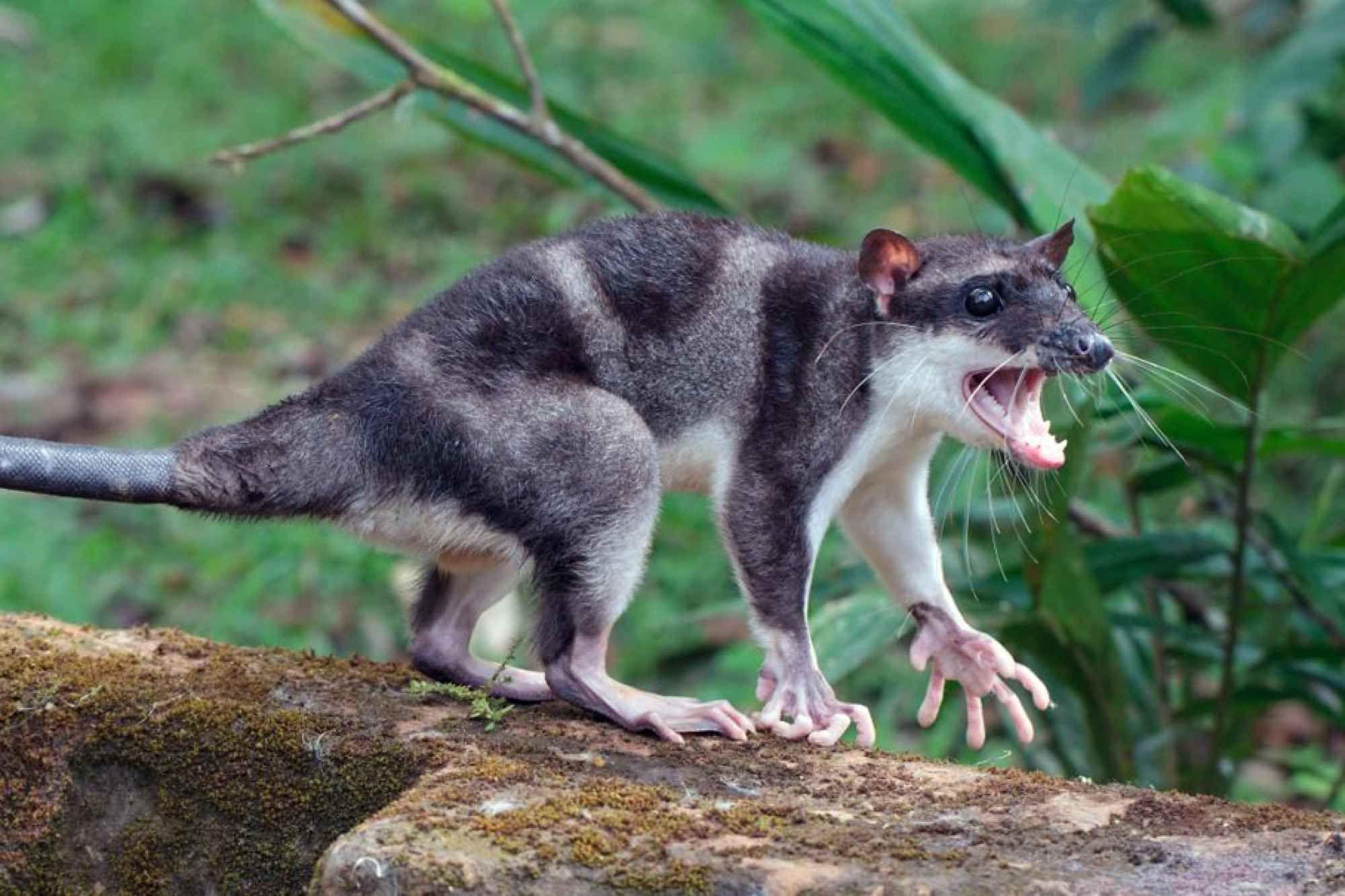 Strangest Animals In South America