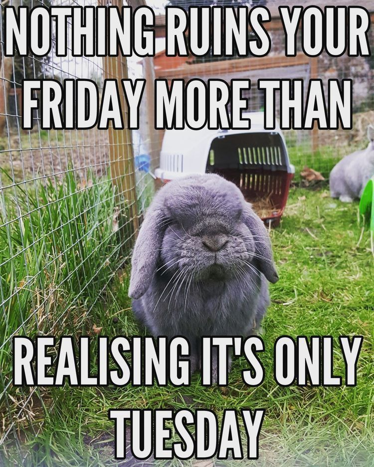 Pin By Kevin Zegars On Missing My Bunny Tuesday Meme Funny Tuesday Meme Funny Animal Memes