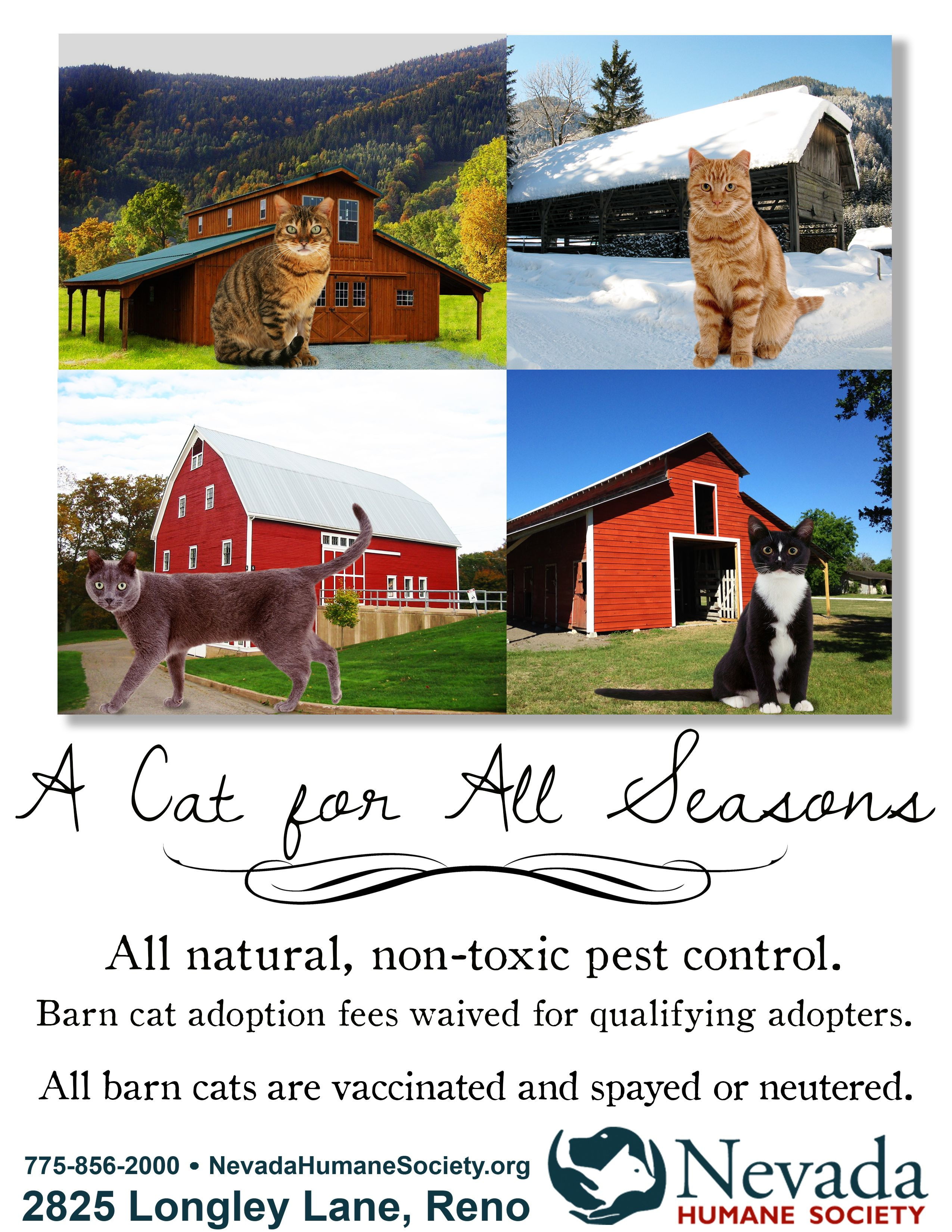 Barn Cats A Cat for all Seasons Cat adoption, Humane