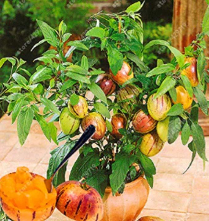 Pin On Exotic Fruit 400 x 300