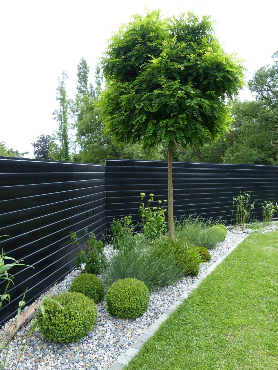 Dark Black Or Dark Grey Fences Receded And Highlight The Planting In Front Fence In 2020 Small Front Yard Landscaping Modern Backyard Landscaping Fence Landscaping
