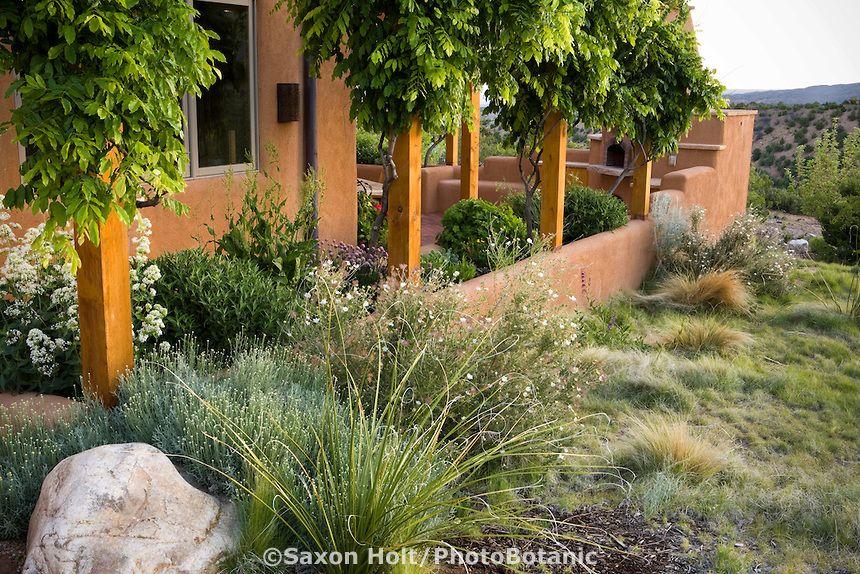 Holt 920 079 Jpg Photobotanic Stock Photography Garden Library California Landscaping Drought Tolerant Garden Xeriscape