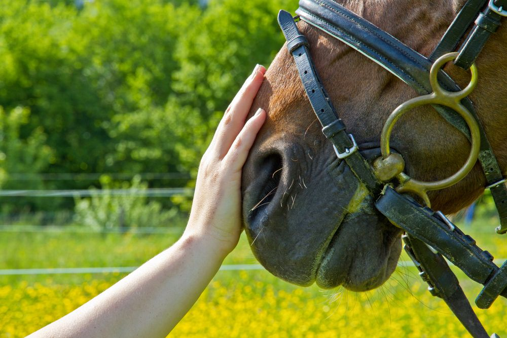10 Healthy Benefits of Pet Therapy Horse therapy, Horses