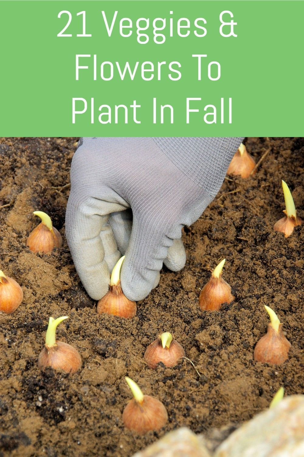 21 Veggies & Flowers To Plant In The Garden In Fal