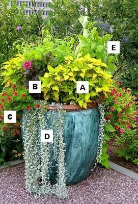 Genial Container Gardening Flowers: A U003d Agastache, B U003d Dahlia, C U003d Calibrachoa, D  U003d Licorice Plant, E U003d Salvia Large Containers Like This Blue Faux Marbled  Tall