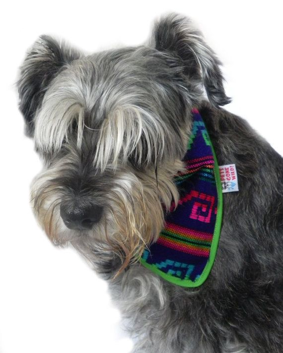 Bandana México Original Mexican Designs and Trendy Style for dogs. We ship all over the world. Shop Online Etsy: https://www.etsy.com/search/shops?search_query=petsgonewild Facebook Fan Page: https://www.facebook.com/PetsGoneWild.mx?fref=ts