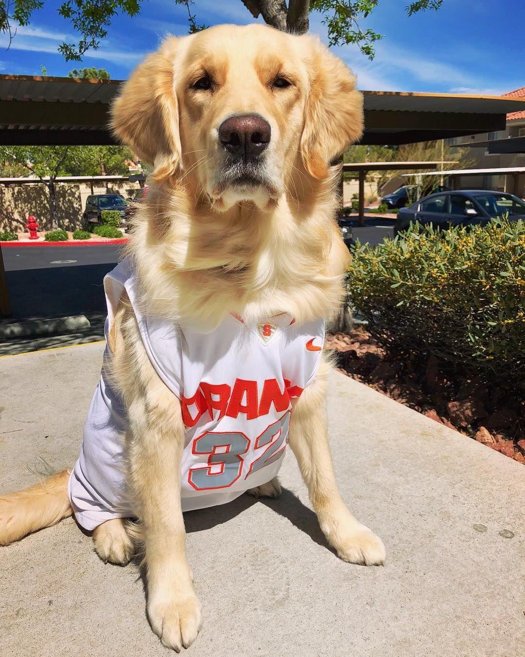 Pin By Syracuse University On An Orange S Best Friend Pets