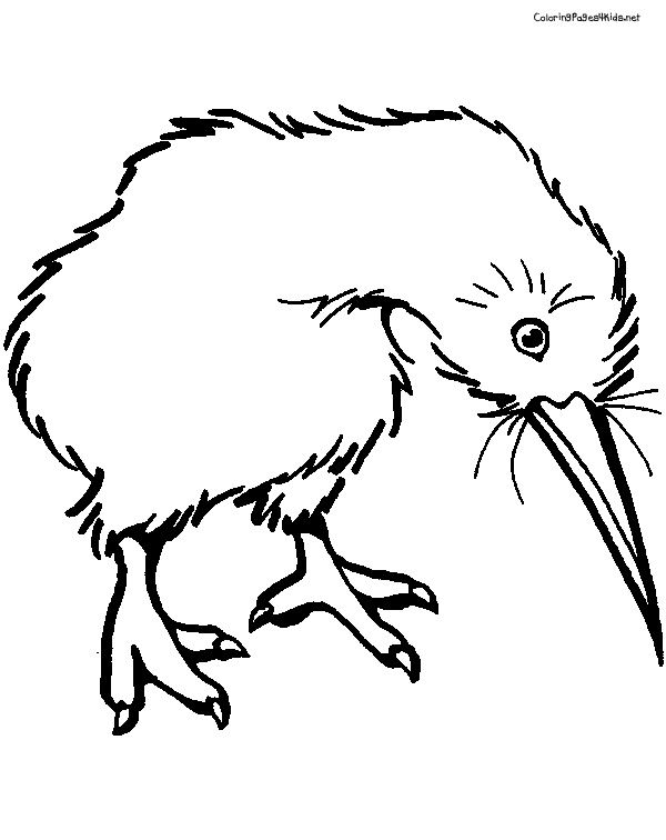 Superb Kiwi Coloring Pages