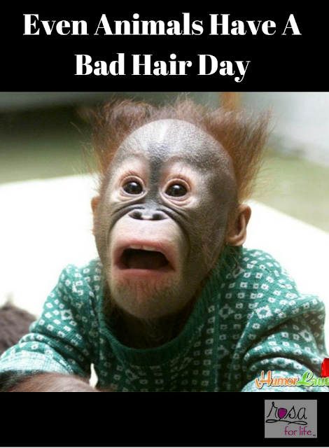 Even Animals Have A Bad Hair Day Monkeys Funny Court Reporting Funny Monkey Memes
