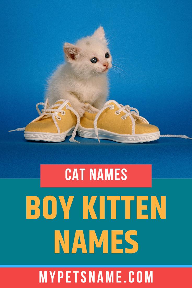 Boy Kitten Names Kitten Names Baby Pet Names Boy Cat Names