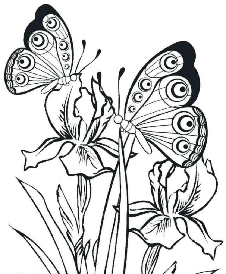 Butterfly Coloring Pages Pdf