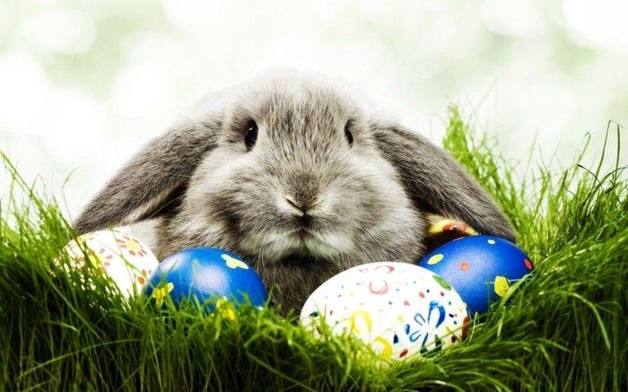 Wallpaper Ostern Mit Einem Hasen Im Gras Frohe Ostern Frohe Ostern Grusse Ostern Bilder