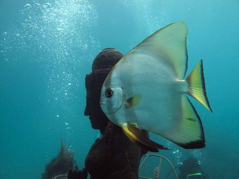 Bio-Rock Pemuteran Bali Indonesia - THE CORAL GODDESS ~Aquatic~