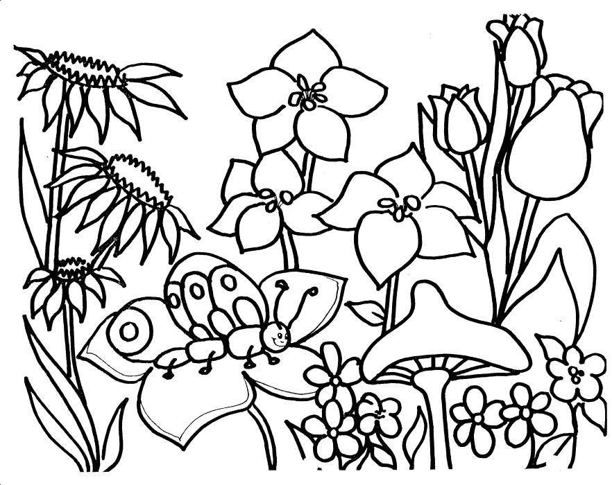 Flower Garden Drawing flower garden coloring pages for adults | coloring pages