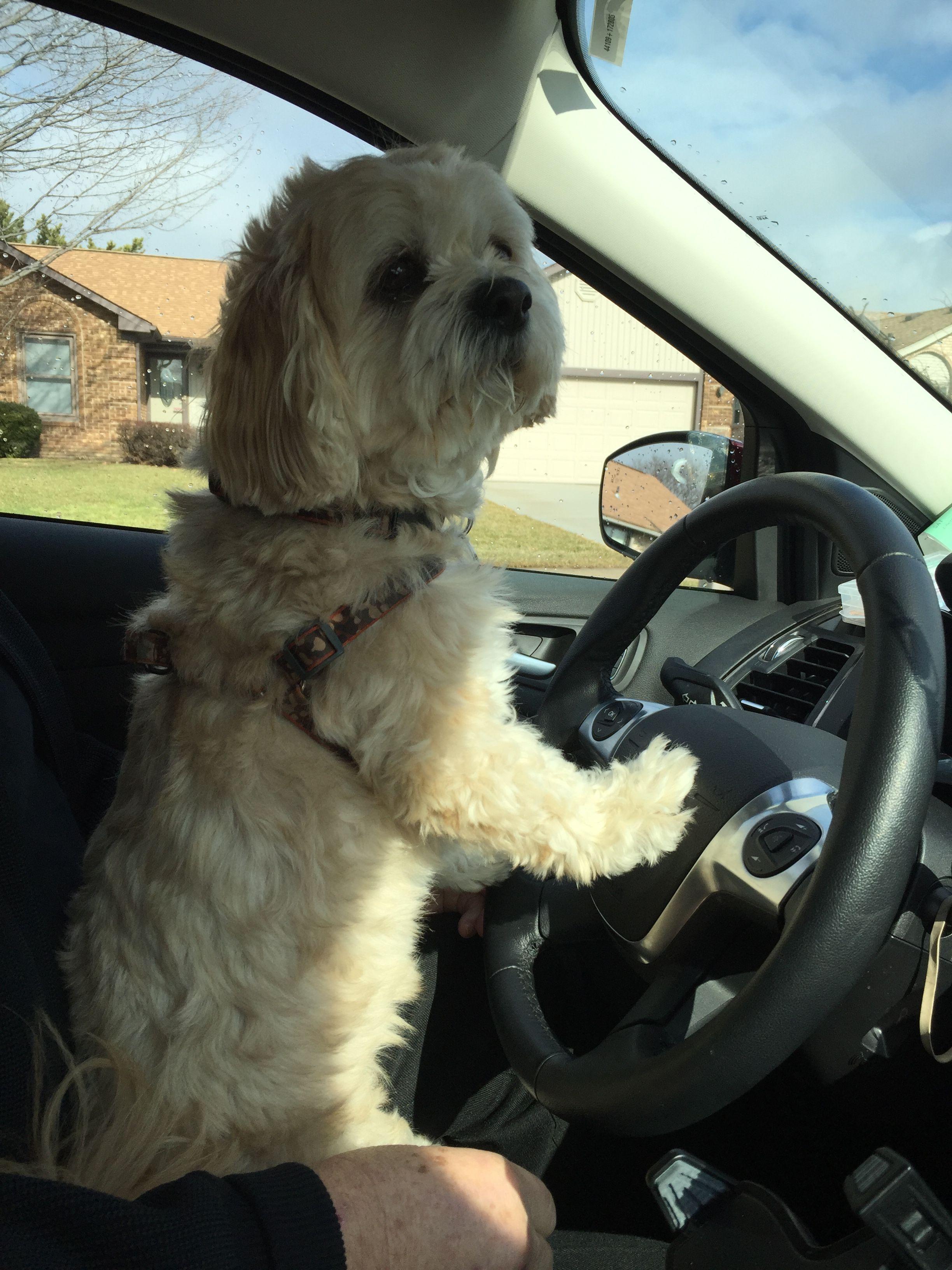 I M Driving Dog Love Animals Dogs