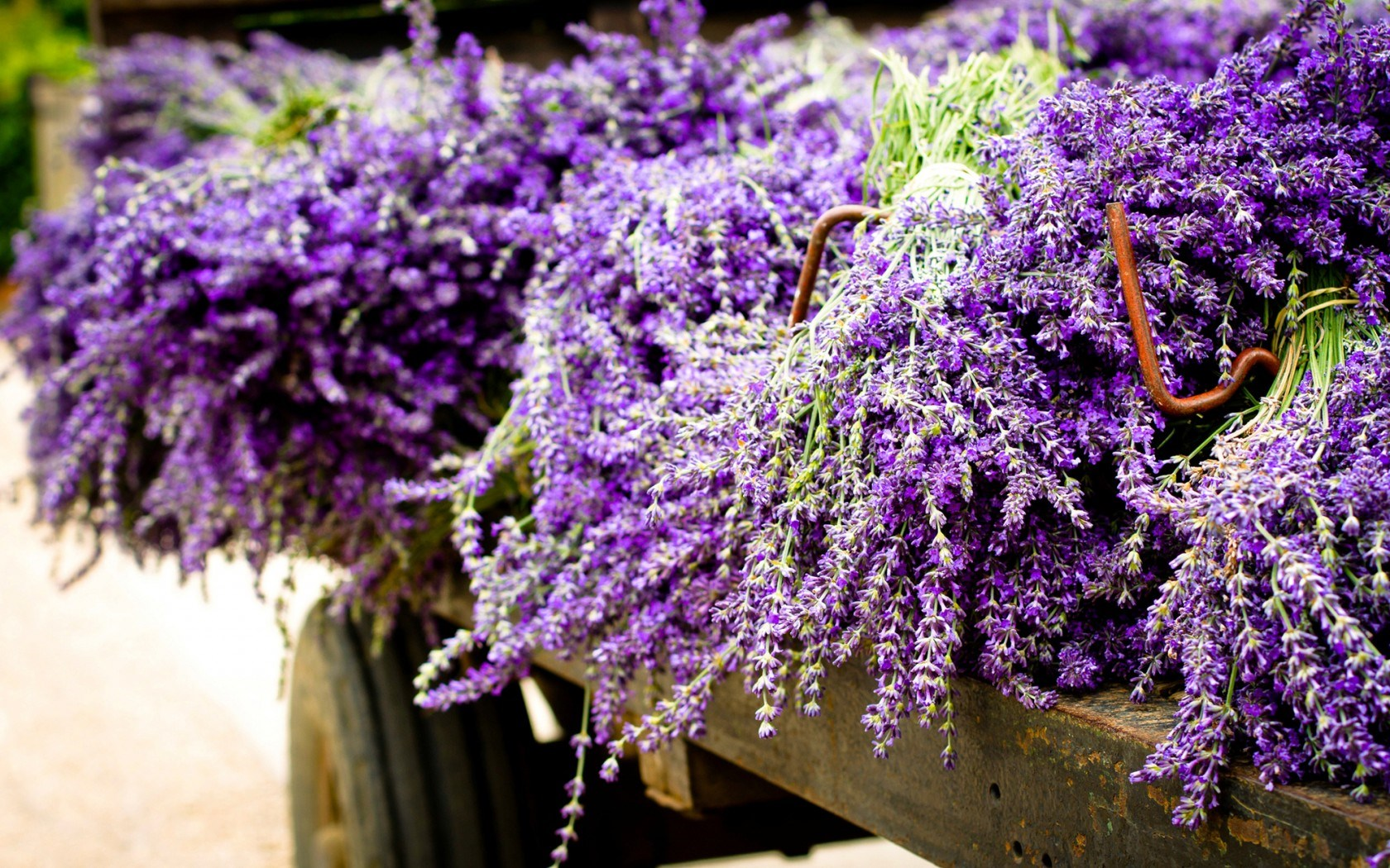 Animated Lavender Pictures Buscar Con Google Lavender Flowers Best Flower Pictures Flowers Nature