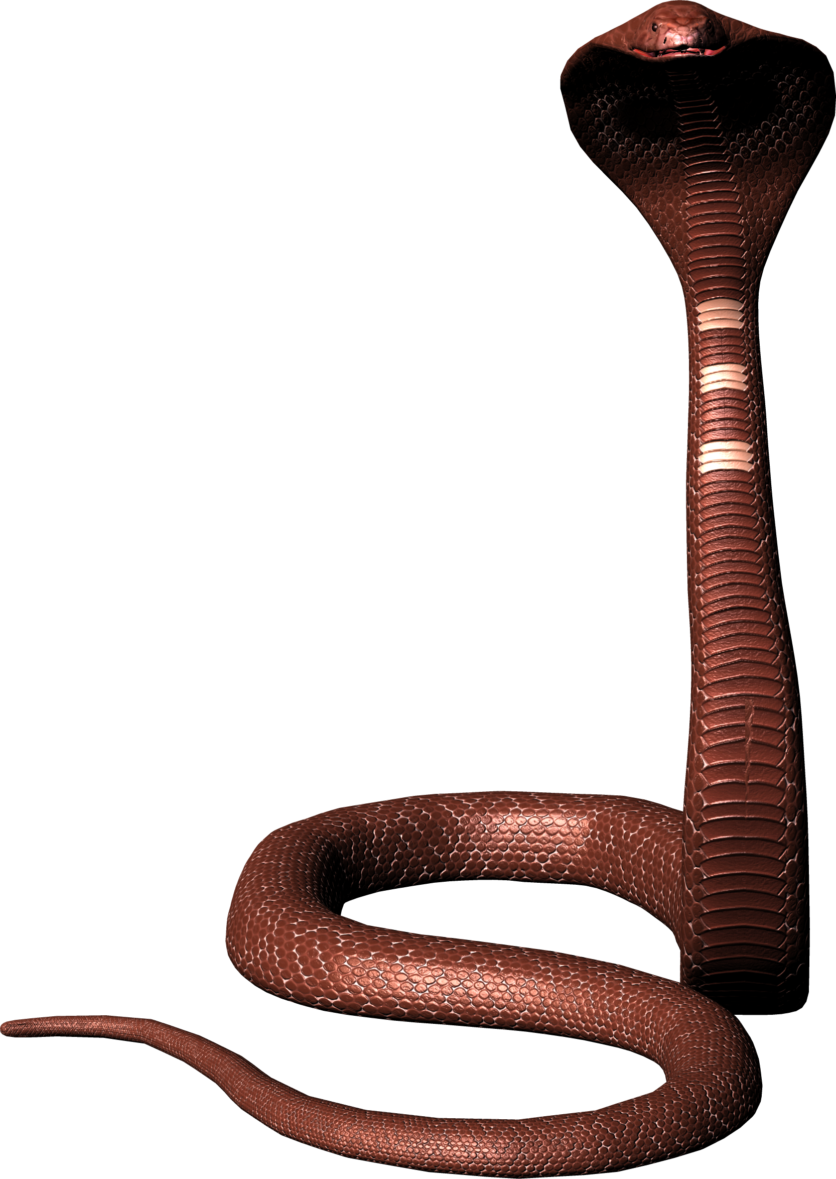Sanke Stand Up Png Image Snake Snake Images Free Download Pictures