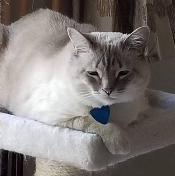 NEVER FOUND Cat West Jordan, Utah, UT, United States