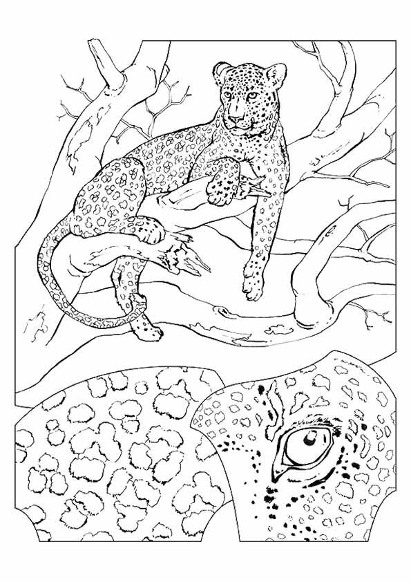 25 Best Cheetah Coloring Pages For Your Little Ones Giraffe Coloring Pages Cartoon Coloring Pages Animal Coloring Pages