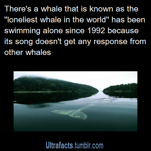 Pin by Heather Ramon on The Loneliest Whale (With images