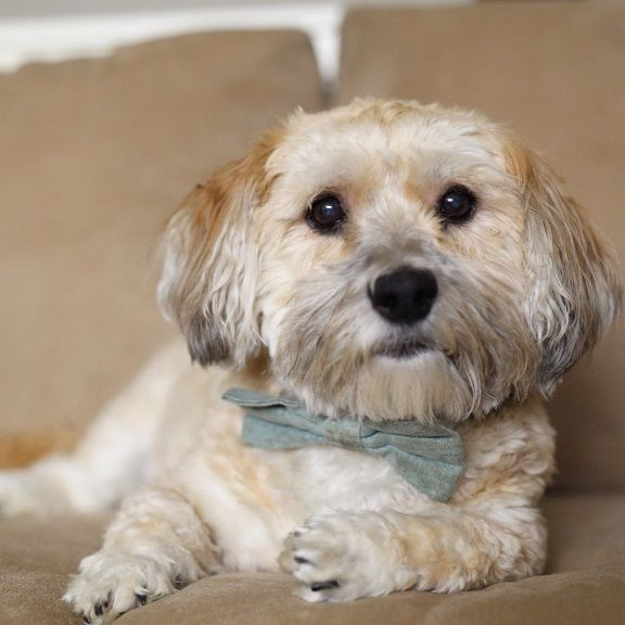 Harley In Michigan Is Available For Adoption From Hri Now
