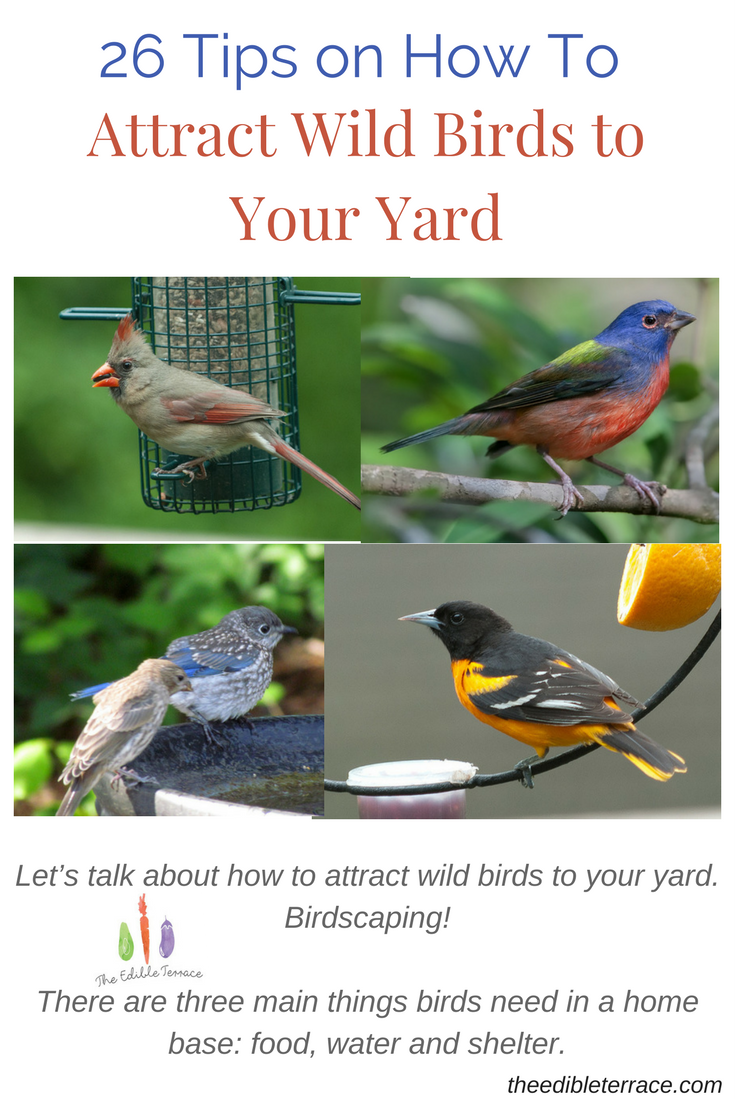 There Are Three Main Things Birds Need In A Home Base: Food, Water And