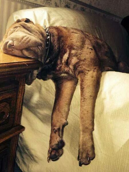 Derpy Dogs In Ridiculously Awkward Sleeping Positions Animal - 30 adorable dogs sleeping awkward positions