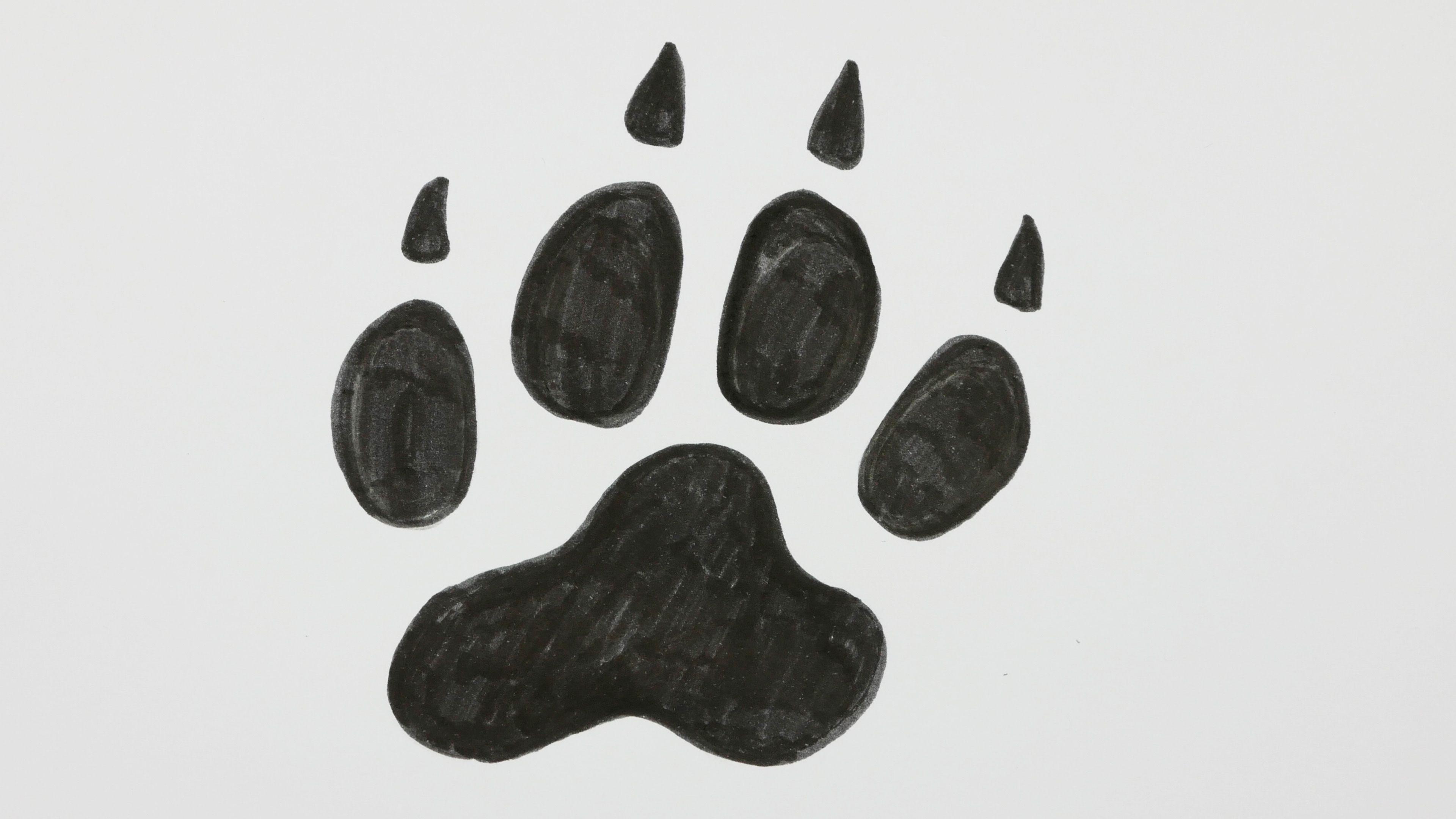 How To Draw A Dog Footprint Dog Paw Doodle Cartoon Comic Pic 14 Youtube Https Youtu Be 7 Tny Ulzek Subscrib Doodle Cartoon Drawings Dog Paw Cartoon