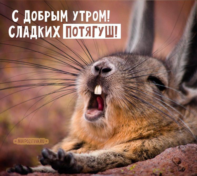 Открытки смешные с добрым утром с животными
