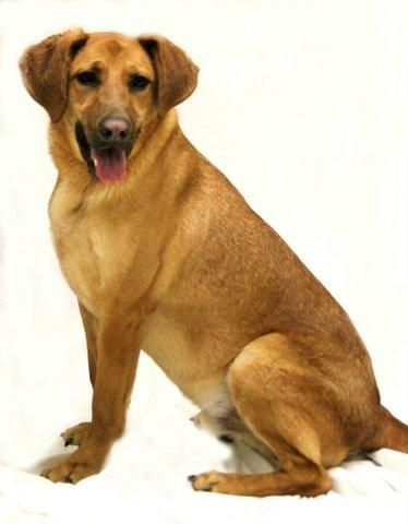 Adopt Kyle *NO ADOPTION FEE TO APPROVED HOME* on