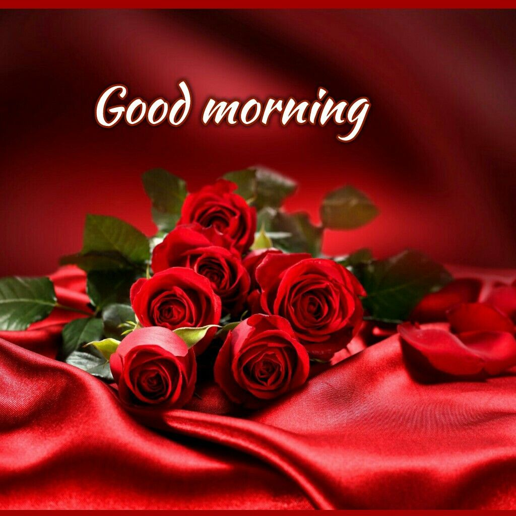 Good Morning Good Morninghave A Wonderful Day Flowers Red