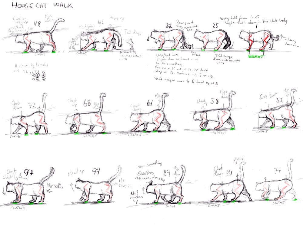 Walking Cat Animation  Google Search