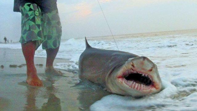 Man caught shark off jersey shore | Shark Brutality | Ocean city nj