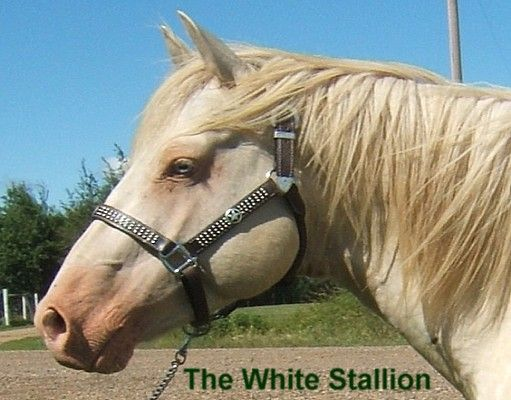 Big The White Stallion