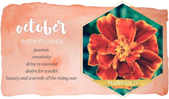 October Birth Flower Marigold Birth Flowers Birth Month