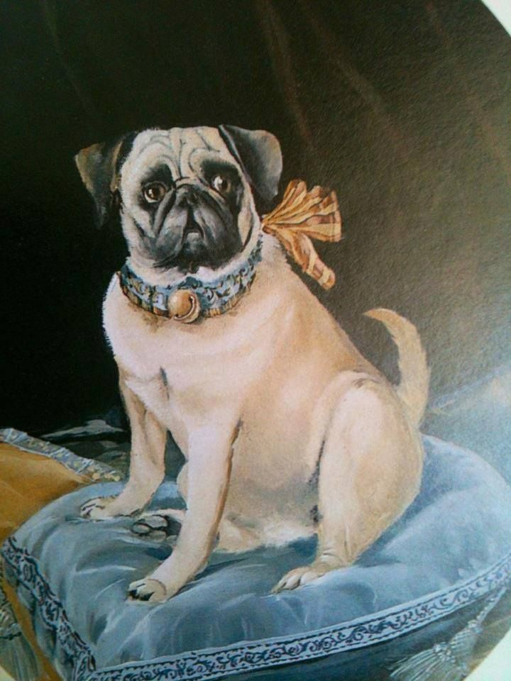Duchess Of Windsor S Pet Pug Pet Pug Pug Dog Pugs And Kisses