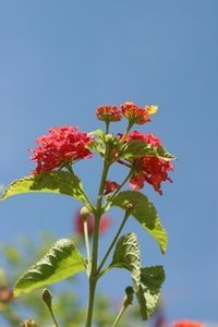 Winter Care For Lantana Plants Decor Outdoors Patio Lantana