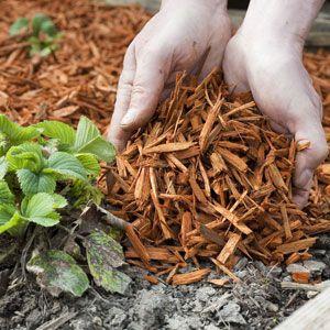 choisir le bon paillis pour couvrir le sol du jardin au potager pinterest paillis le. Black Bedroom Furniture Sets. Home Design Ideas