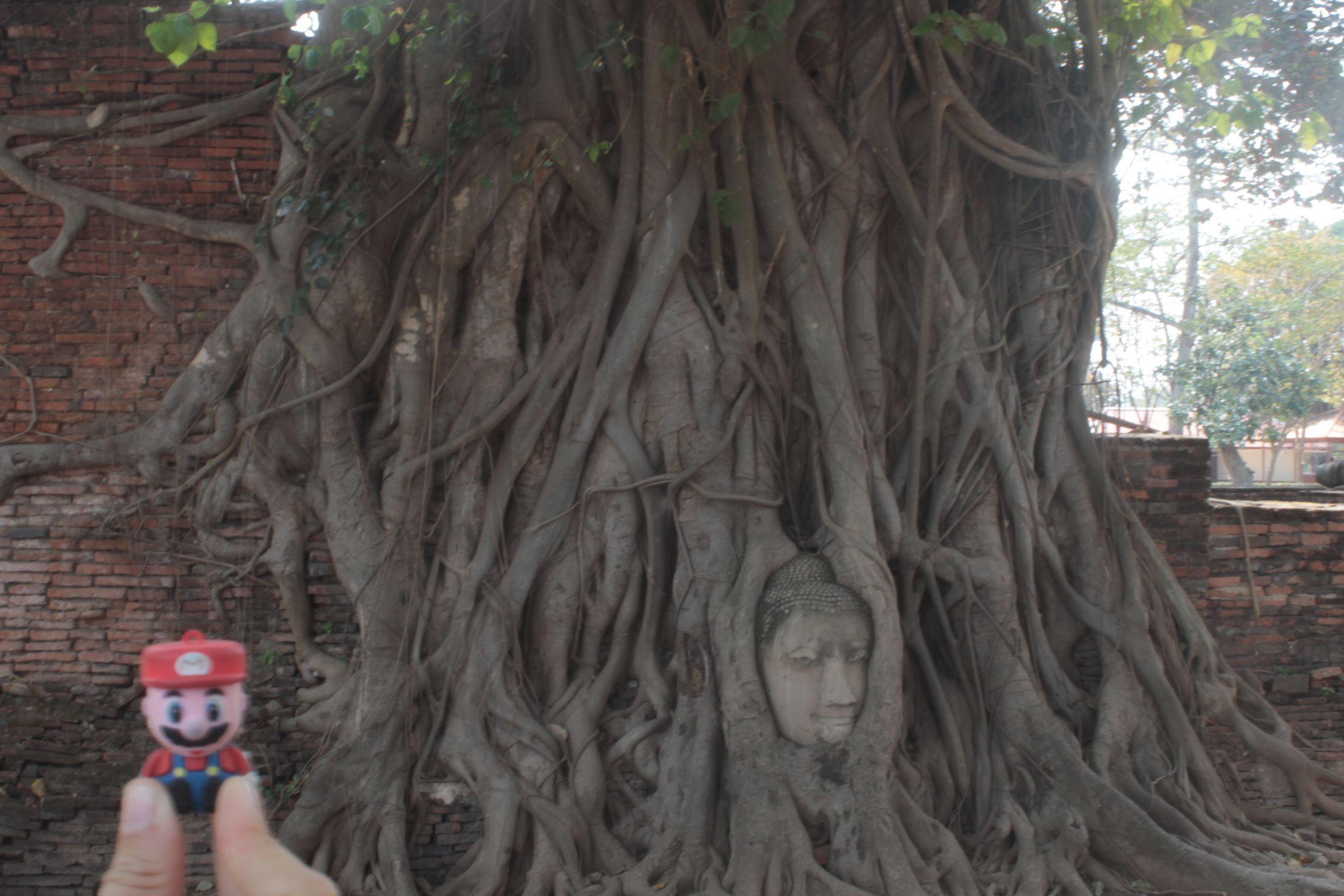 Mario en Ayutthaya