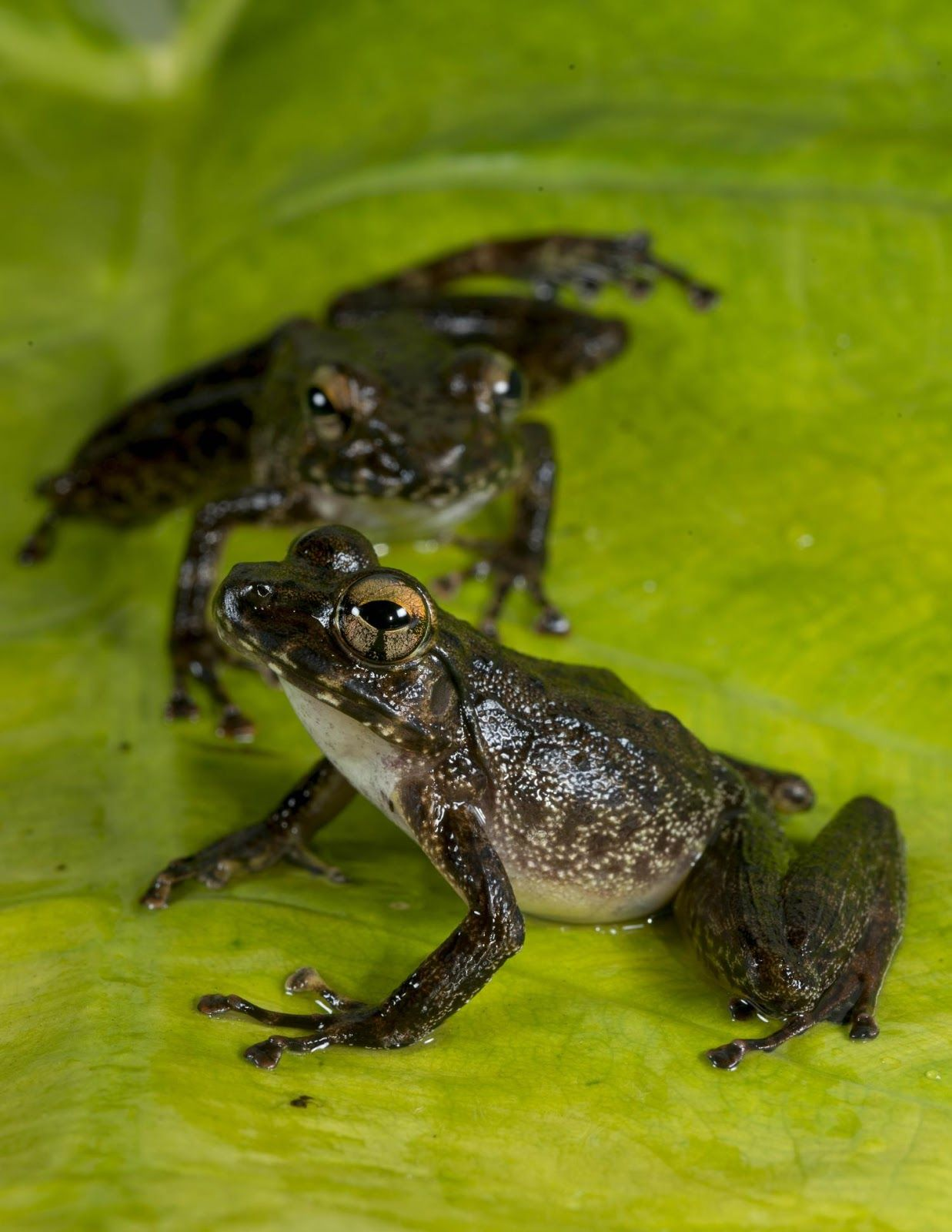 Dinosaurs' loss was frogs' gain (With images) Frog, Frog