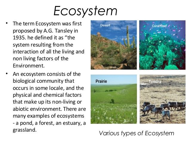 types of ecosystems