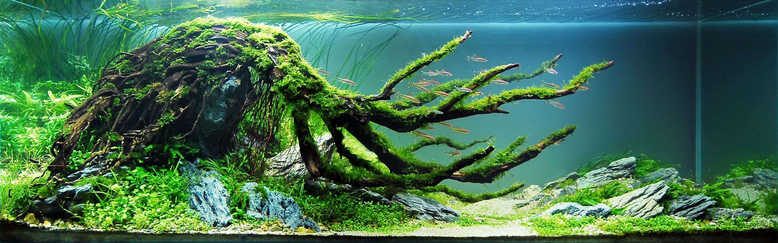 Aquascaping on Pinterest | Aquascaping, Planted Aquarium ...