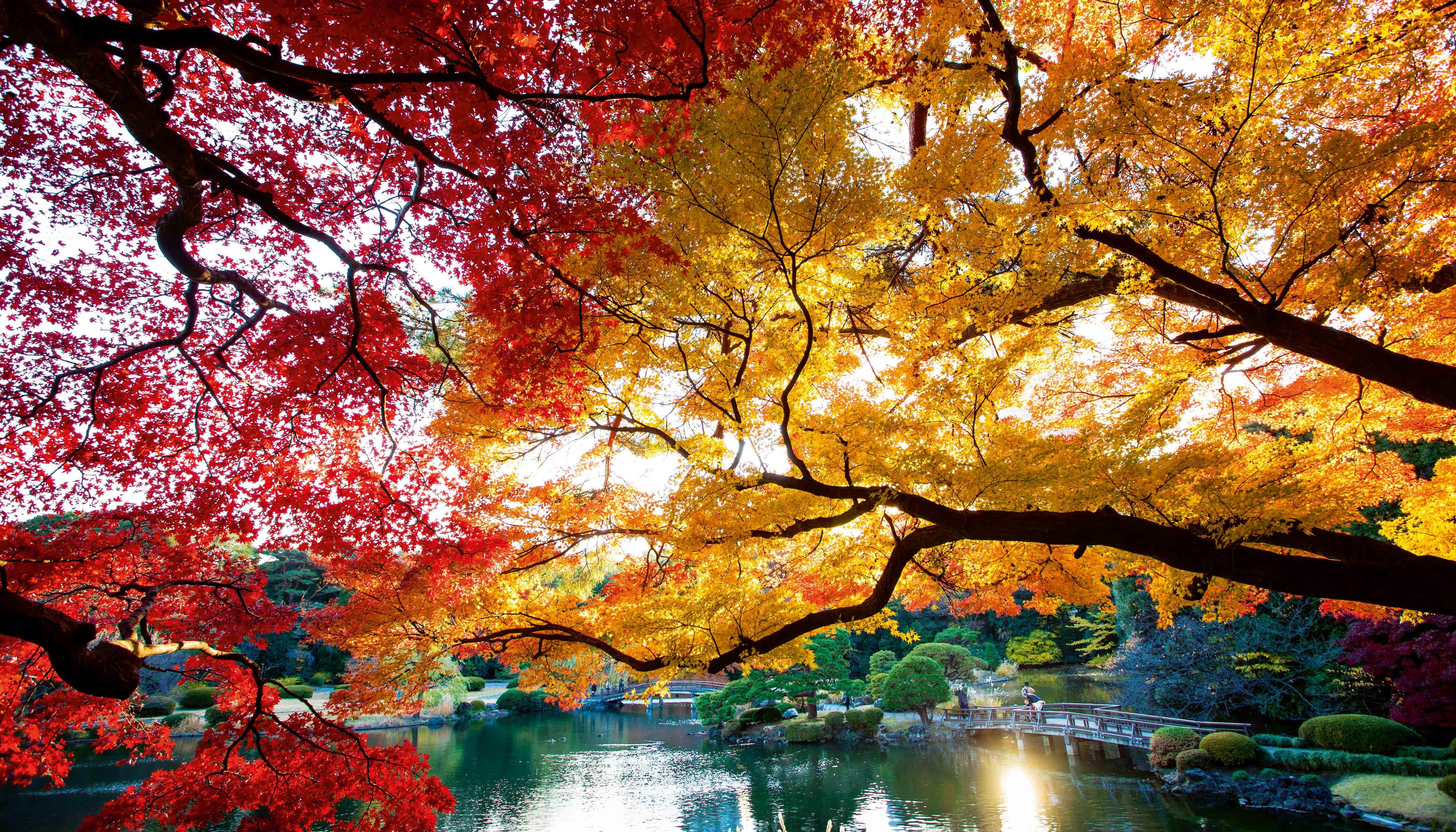 paysage japon - Recherche Google | Paysage automnal, Paysage, Paysage automne