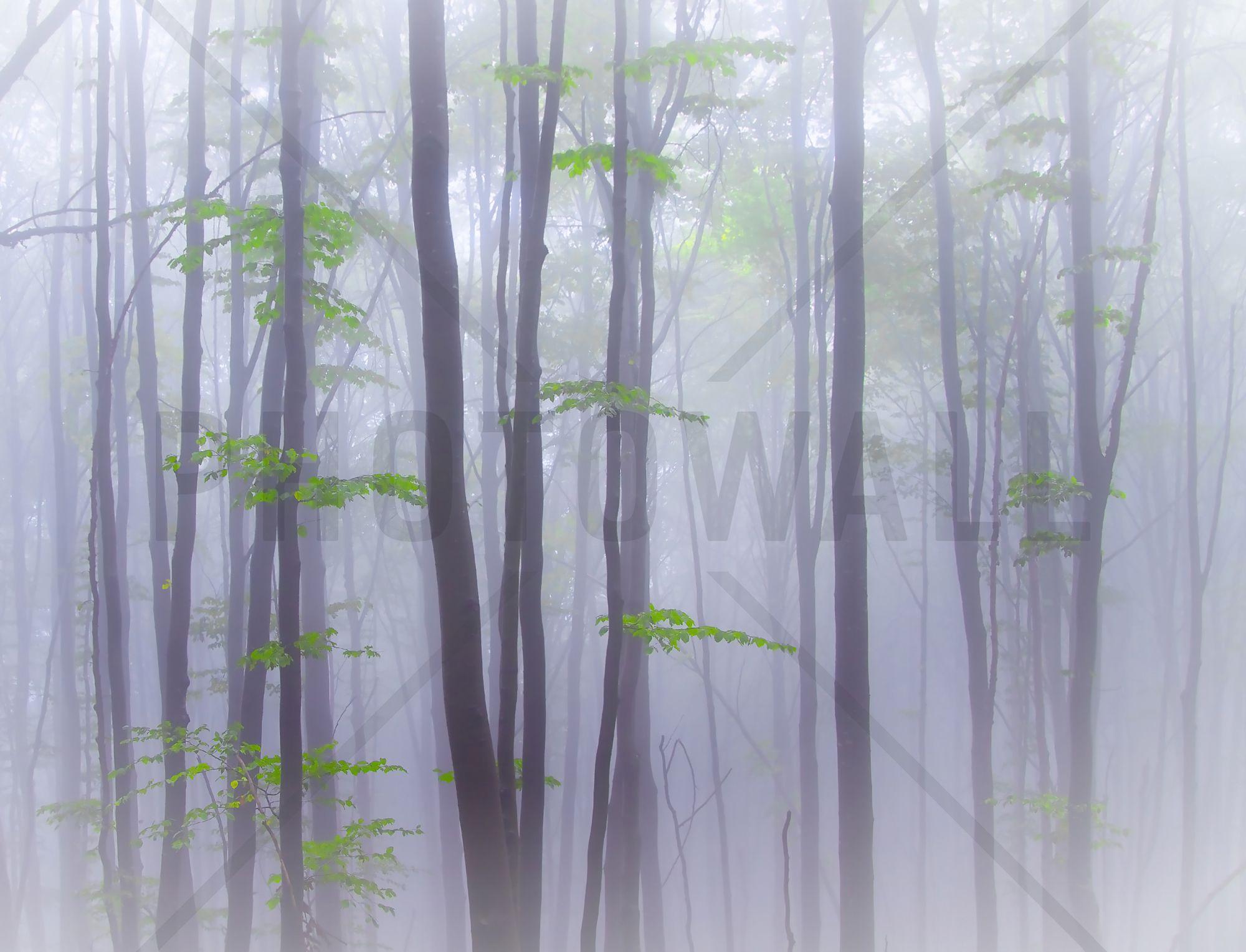 misty woods wall mural photo wallpaper photowall ideas for misty woods wall mural photo wallpaper photowall