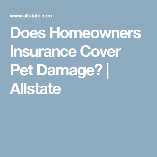 Allstate Quote Does Homeowners Insurance Cover Damage Causedpets  Dog And Cat