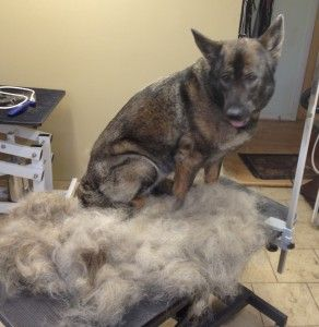How To Make Your Dog Shed Less De Fur Your Home Guide