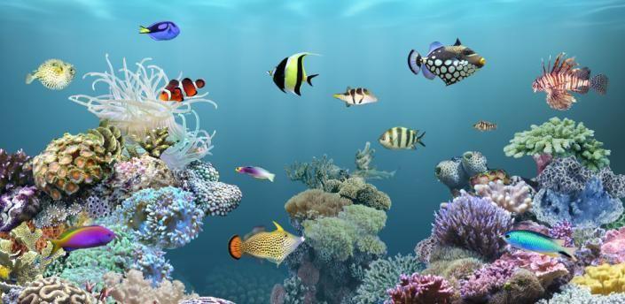 Pin De Rebecca Campbell En Coral Reef Colors And Textures Fondo De Pantalla De Peces Ambiente Acuatico Fondo De Pantalla Animado
