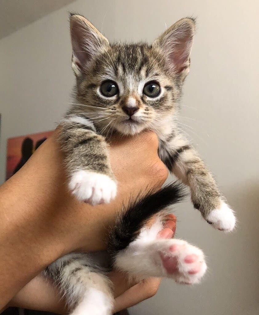 70 Off Anniversary Sale 2019 Litter Locker Cat Mat Free Shipping Hot Selling Kittens Cutest Cute Cats And Kittens Cute Cats