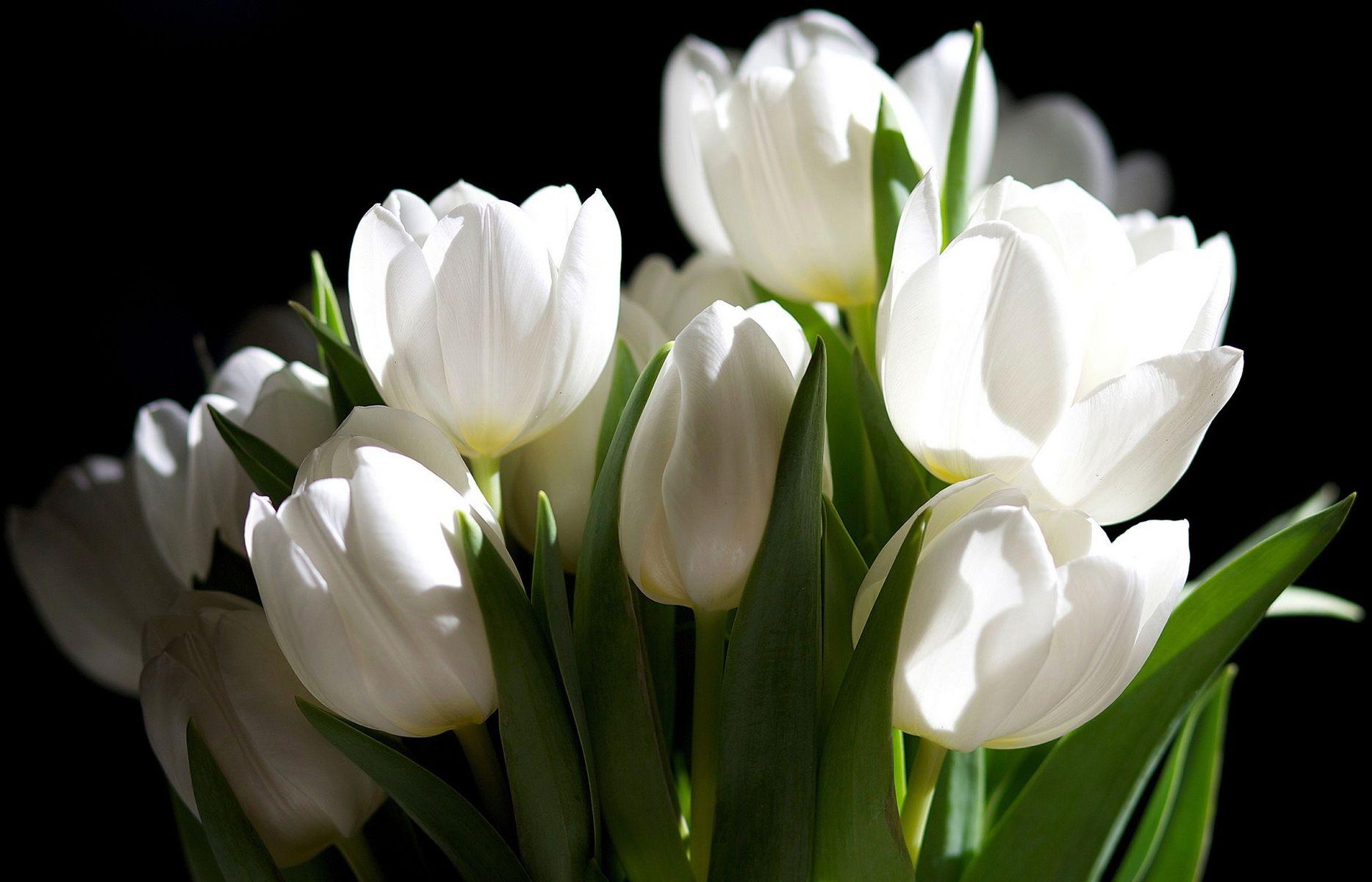 Best White flower wallpaper ideas on Pinterest Floral